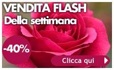 vendita flash