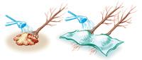 conservare piante a radice nuda