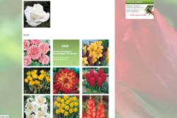 calendario piantagione fioritura