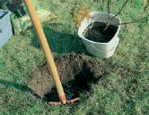 fare buca per piantare arbusto