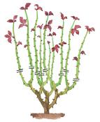 potatura di un rosaio