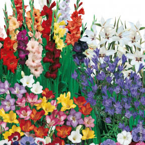 Assortimento 100 bulbi per bouquet