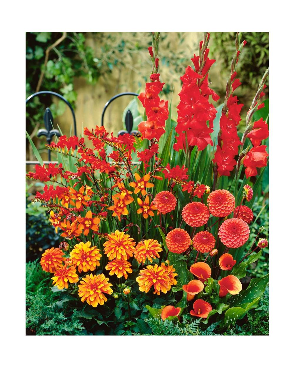 Quali Bulbi Piantare In Primavera bulbi : consigli giardinaggio