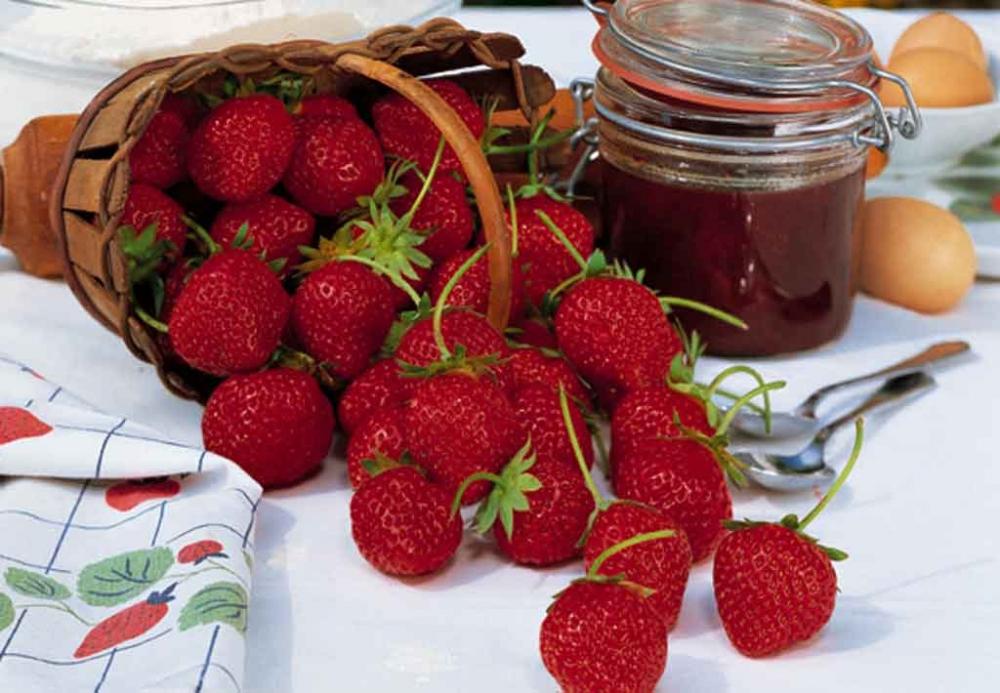 Fragole consigli di messa a dimora potatura e mantenimento for Pianta di fragole