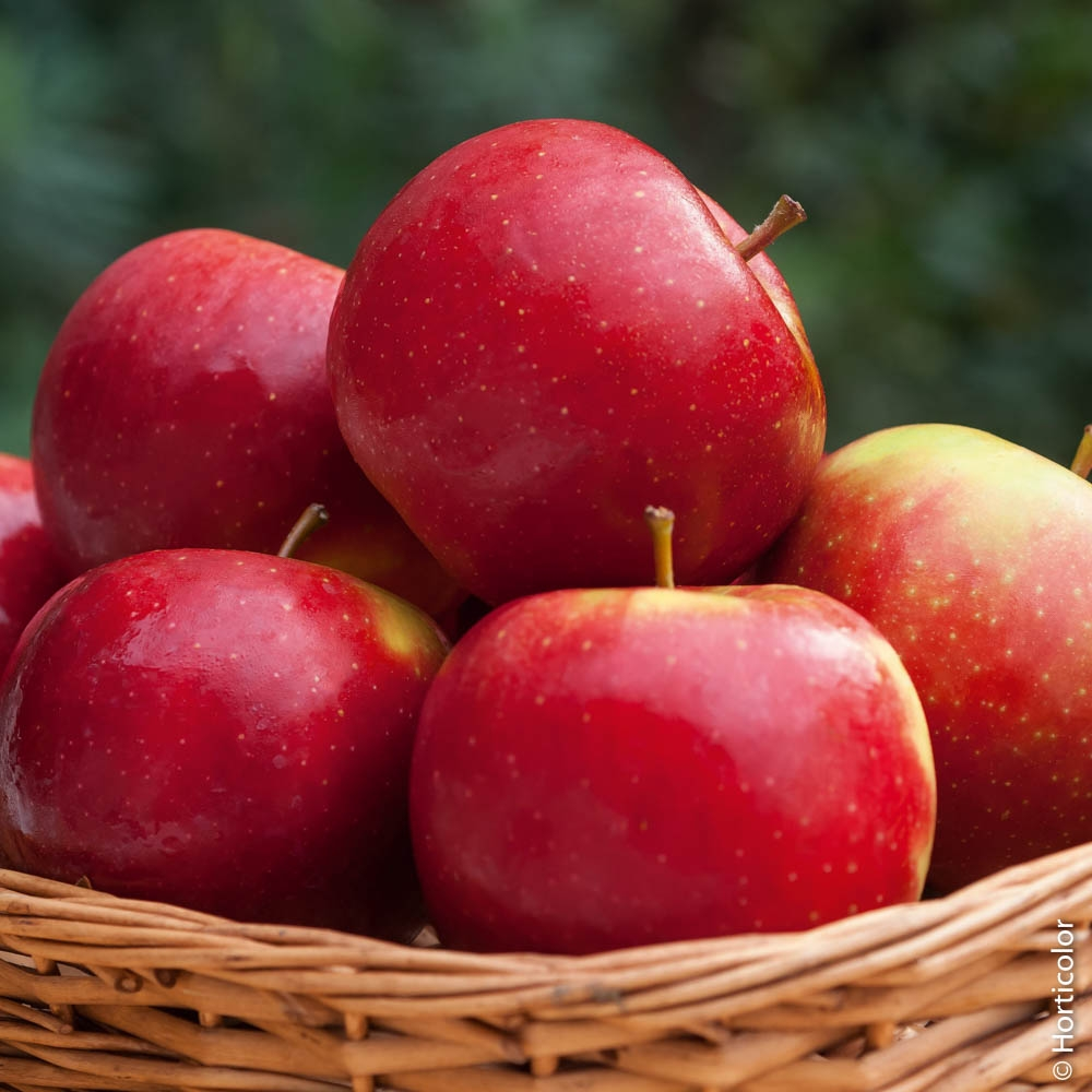 Messa a dimora degli alberi da frutto for Piante da frutto a 1000 metri