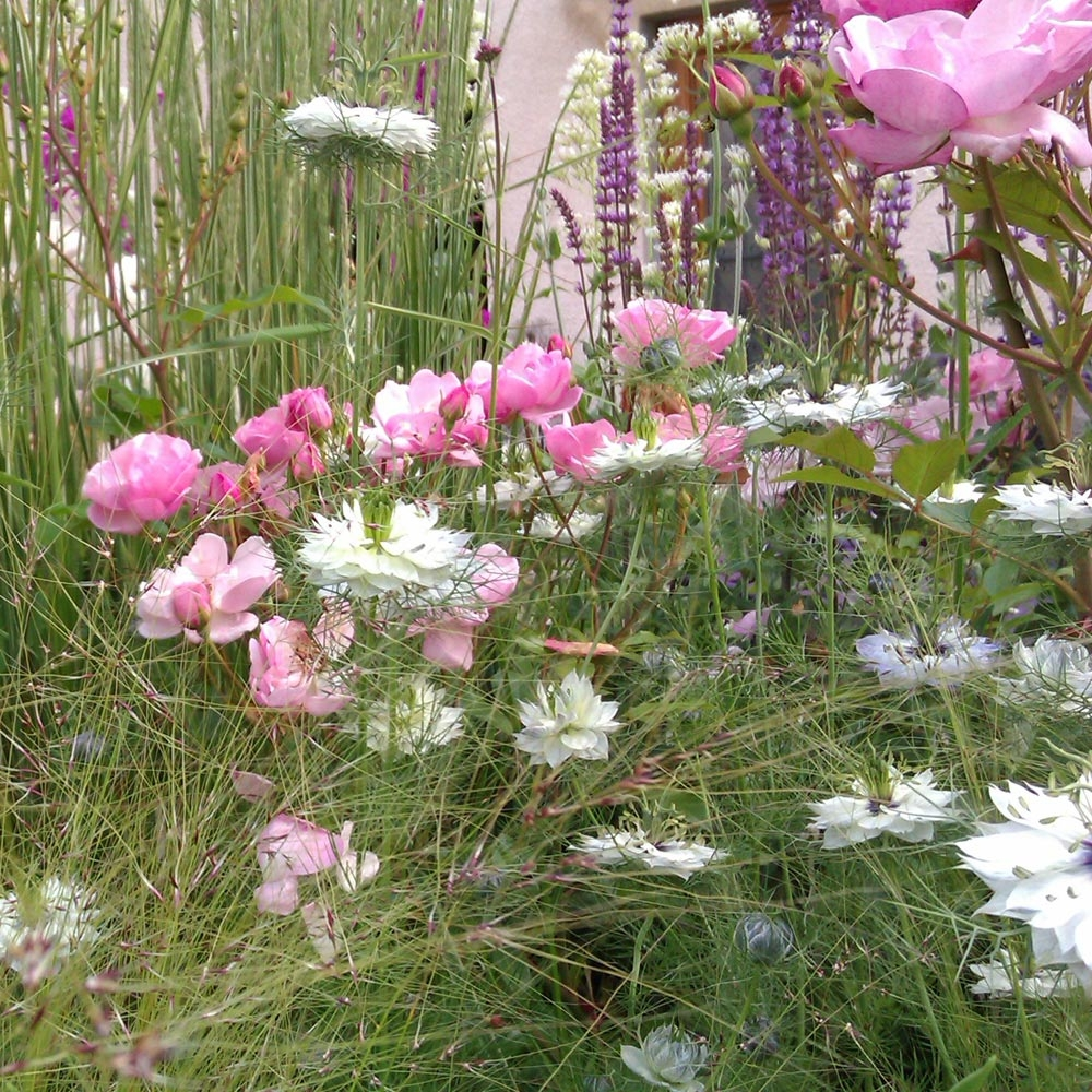 Piante Per Aiuole Perenni piante perenni