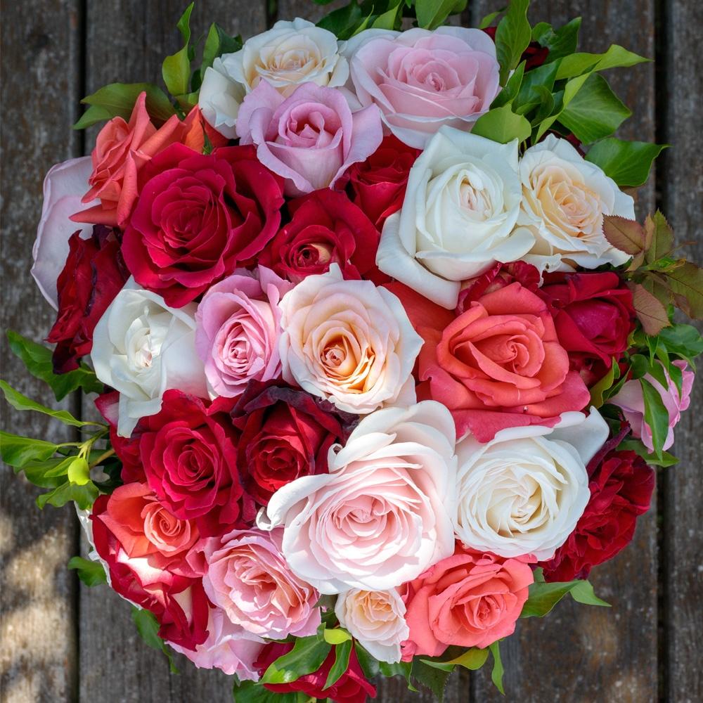 Tutori Per Rose Rampicanti rose : consigli di coltivazione