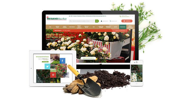 Vivaio online meilland richardier rose bulbi vivaci alberi for Piante da frutto online